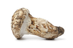Matsutake mushroom Royalty Free Stock Images