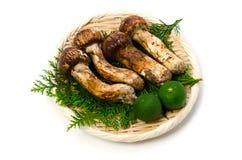 Matsutake mushroom Stock Photography