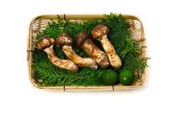 Matsutake mushroom Royalty Free Stock Image