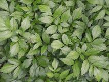 Matt mörker - gräsplansidor av växterna täcker den hela bilden växt- bakgrundsgrunddesign Arkivbilder