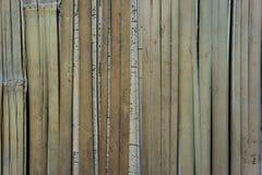 Matt Wattled bambu Royaltyfri Bild