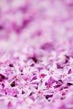 Matta av blommor Arkivfoton