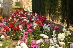 Matta av blommor som gränsas av träd Fotografering för Bildbyråer