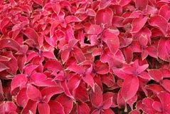 Matta av de röda blommorna Arkivfoto