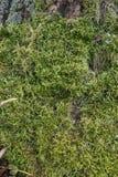 Matta av grön mossa royaltyfri fotografi