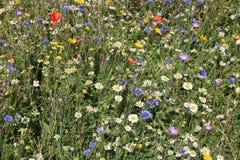 Matta av lösa blommor Fotografering för Bildbyråer