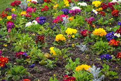 Matta av ljusa blommor i staden Royaltyfria Foton