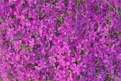 Matta av rosa blomningar arkivfoto