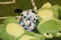 Matta för fält för fotboll för leksakpaddahund royaltyfria foton