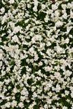 Matta för gul och vit blomma royaltyfri foto