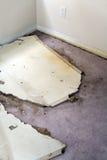 matta skadlig läckande gipsplattavatten Fotografering för Bildbyråer