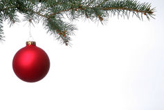 Matte Red Christmas Ball. Hangs from pine branch Royalty Free Stock Photo