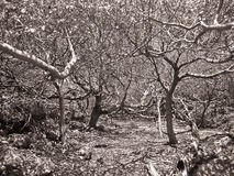 Matted dry trees Stock Images
