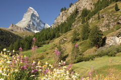 Matterhorn. The Matterhorn, the iconic emblem of the Swiss Alps, seen from Zermatt Stock Images