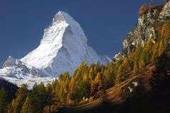 The Matterhorn. Is partly framed by larches in full fall colors Stock Images