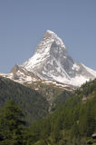 Matterhorn above firsnear Zermatt Royalty Free Stock Photography