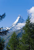 The Matterhorn behind some trees. The Matterhorn in the swiss alps behind some trees Stock Image