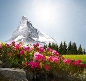 Matterhorn com flores imagem de stock