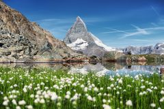 Matterhorn and and grass near lake at the morning time. stock image