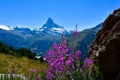 Matterhorn sikt i vår fotografering för bildbyråer