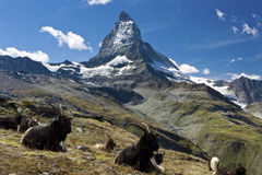 Matterhorn switzerland Royalty Free Stock Photos