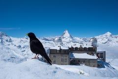 matterhorn switzerland Fotografering för Bildbyråer