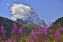 Matterhorn. View of Matterhorn peak surrounded by colored flowers. Zermatt, Switzerland. (landscape orientation Royalty Free Stock Images