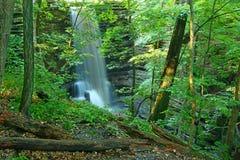 Matthiessen delstatsparkvattenfall Illinois Arkivfoto