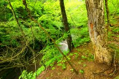 Matthiessen-Nationalpark-Wasserfall Illinois Lizenzfreie Stockfotos