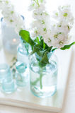 Matthiola flowers Royalty Free Stock Photos