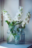 Matthiola flowers Stock Images