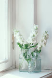 Matthiola flowers Royalty Free Stock Images