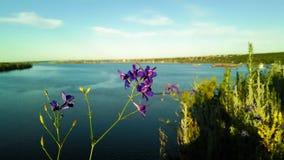 Matthiola incana with river Stock Photos