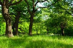 Mattina alla foresta di estate Immagini Stock Libere da Diritti