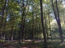 Mattina in anticipo della molla di area boscosa una Immagine Stock