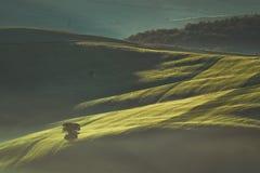 Mattina in anticipo della molla sulla campagna della Toscana, l'Italia Fotografia Stock