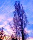 Mattina blu Fotografie Stock