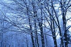 Mattina blu dopo le precipitazioni nevose immagine stock libera da diritti