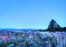 Mattina in Colorado Rockies fotografie stock libere da diritti