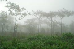 Mattina con nebbia Fotografia Stock