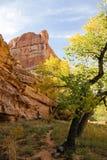 Mattina del canyon Fotografia Stock