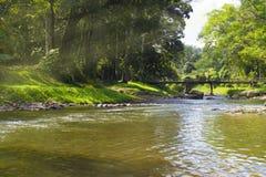 Mattina del fiume del paese nel legno Immagini Stock Libere da Diritti