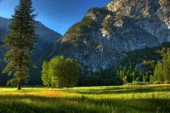 Mattina del prato del Yosemite Fotografie Stock