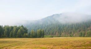 Mattina della foschia nella foresta Fotografia Stock