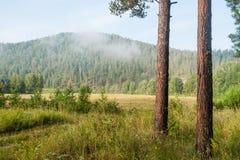 Mattina della foschia nella foresta Immagini Stock Libere da Diritti