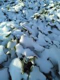 Mattina della neve di wow Immagini Stock