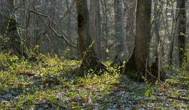 Mattina della primavera immagine stock