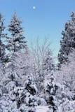Mattina dello Snowy Immagine Stock Libera da Diritti