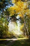 Mattina di Art Beautiful nella foresta di autunno fotografia stock