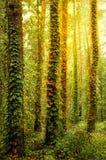 Mattina di autunno Immagine Stock Libera da Diritti